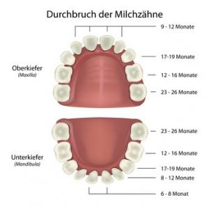 Durchbruch der Zähne